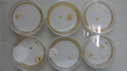 bioburden-plate-count.png