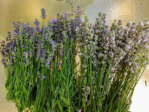 Lavender Blossom Jelly 8 oz
