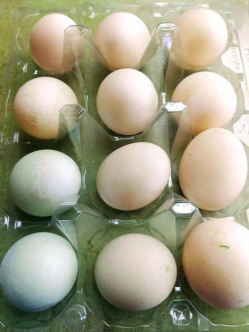 Dozen Duck Eggs
