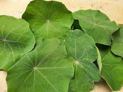 Nasturtium Leaves - 1 oz bag