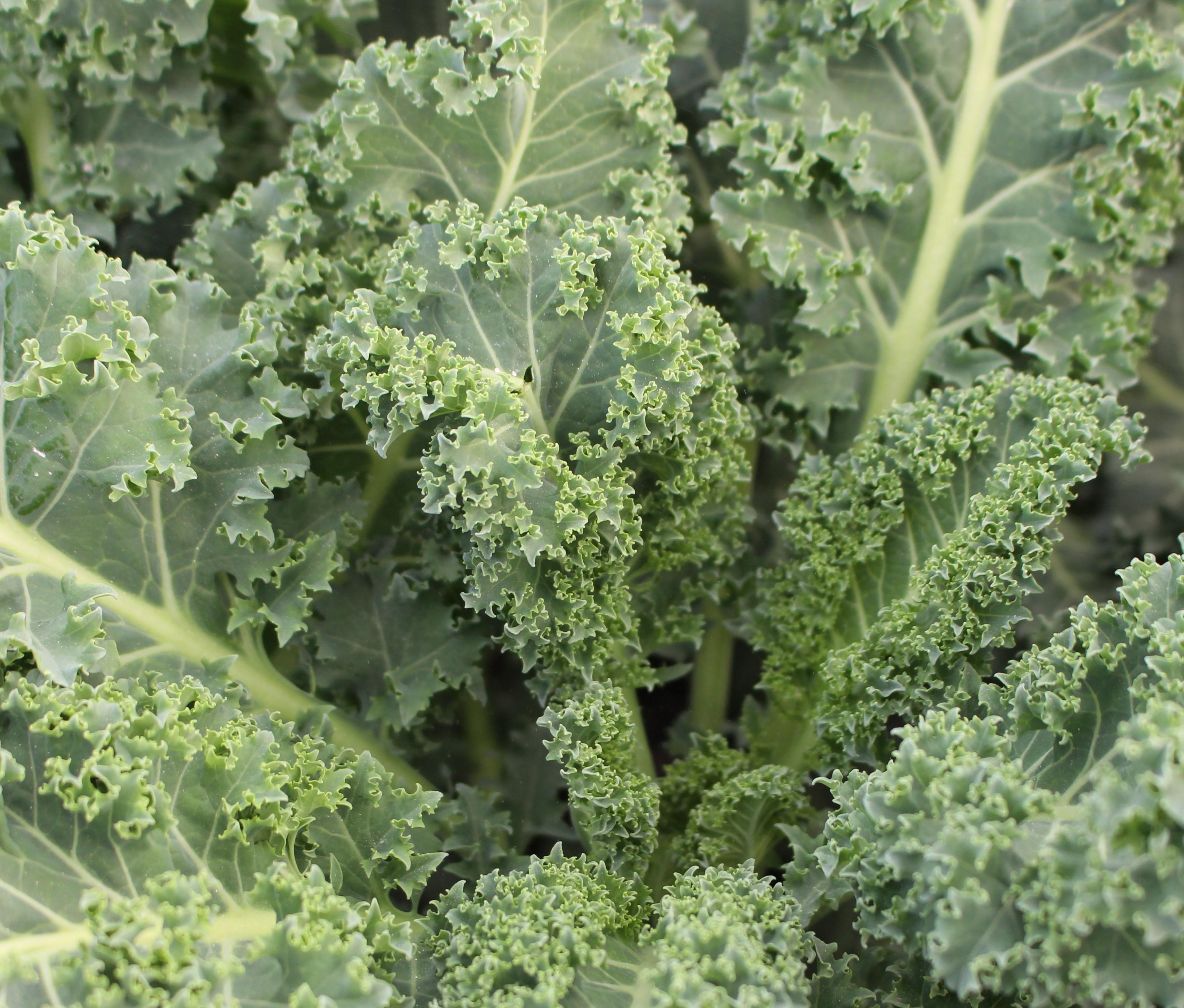 Desiderata Ranch Kale