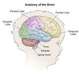 Young Brain Mandarin language Morningsid