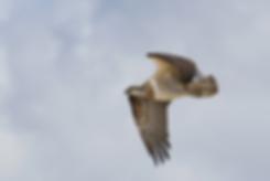 0S7A8491_osprey30_byronbay_surf_eagle_ki