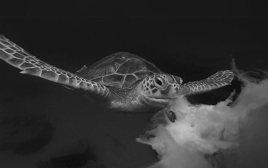 Turtle27BW