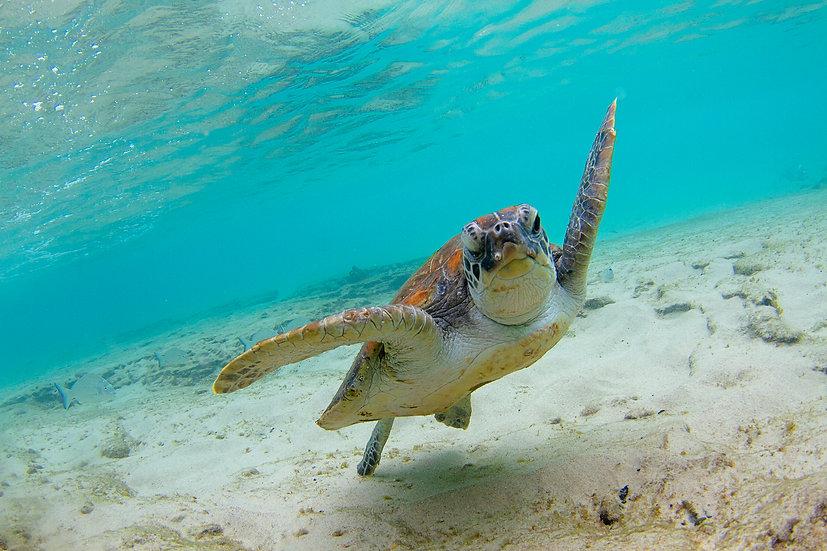 Turtle19