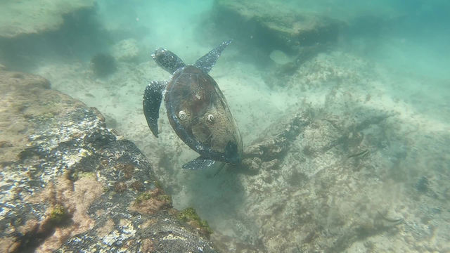 Swimming in the sea with the Turtles