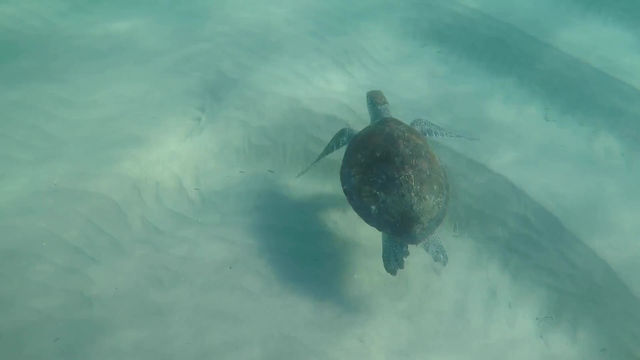 The Turtle Took Me Out To Sea Early Today