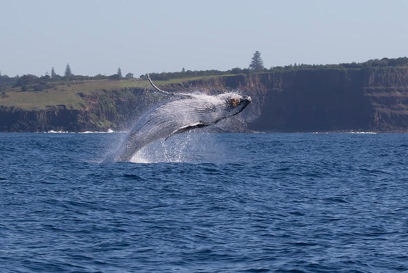 Whale # 18