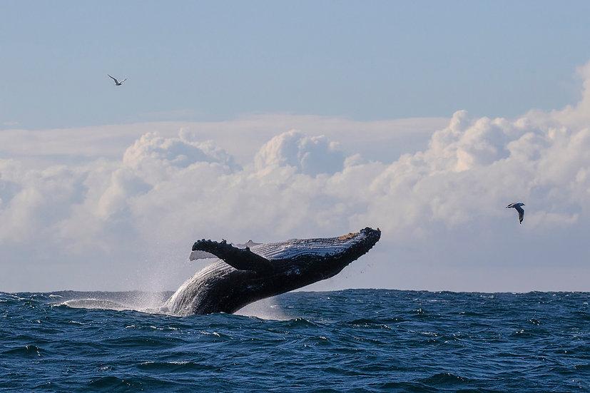 Whale # 11