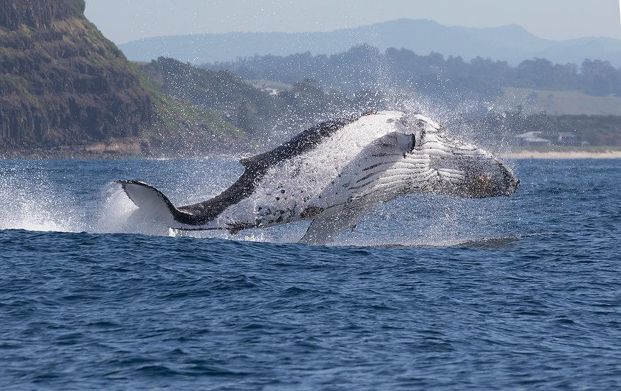 Whale # 5