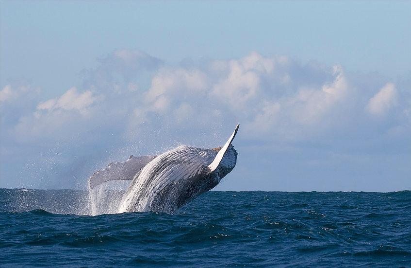 Whale # 10