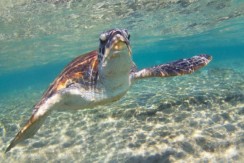 Turtle16