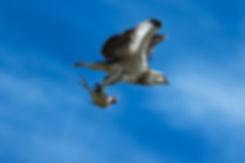 0S7A0012_osprey50_byronbay_surf_eagle_ki