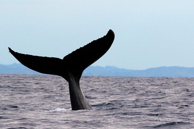 Whale # 14