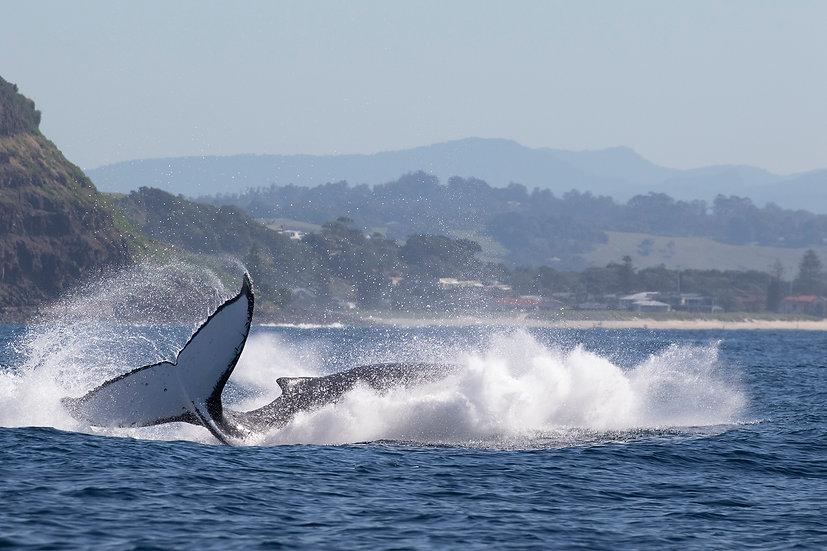 Whale # 13