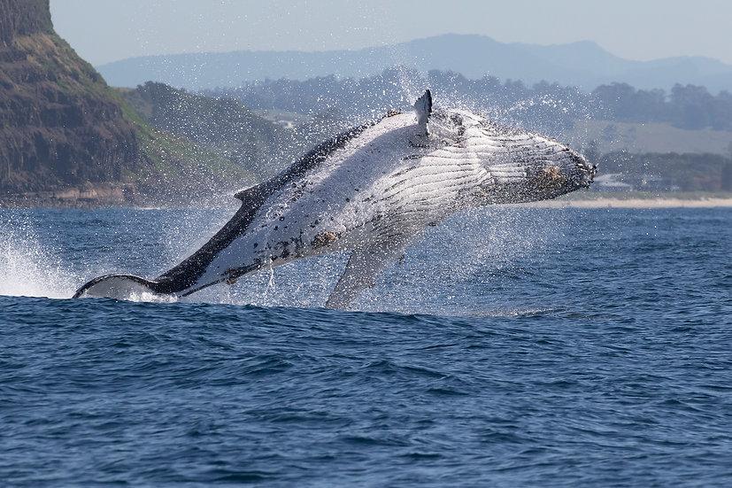 Whale # 4