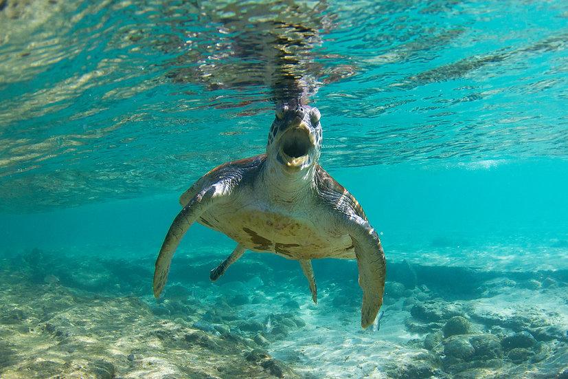 Turtle21