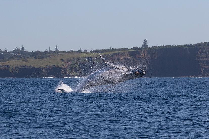 Whale # 6