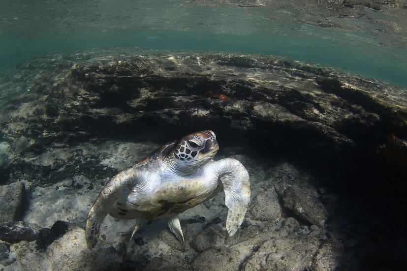 Underwater #6
