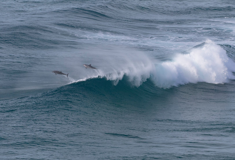 Dolphins #4
