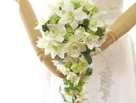 松田聖子さんの挙式でメジャーになったユーチャリス、可憐な花の別名は「アマゾンリリー」
