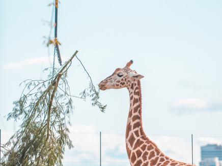 Explore the Magic of Taronga Zoo