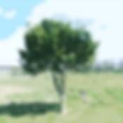 1600_cutout2.png