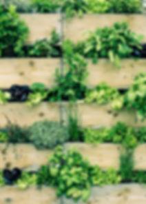 Jardinage urbain
