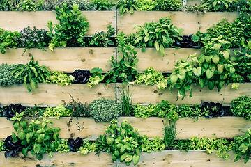 Mur de palettes avec des fines herbes
