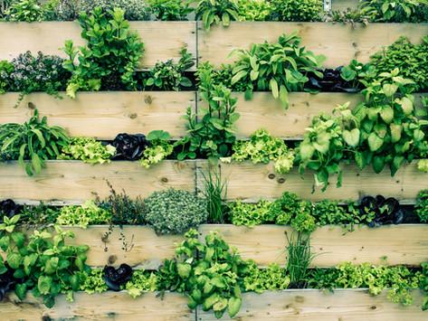 Hochbeete - Bauen, anpflanzen, pflegen und ernten