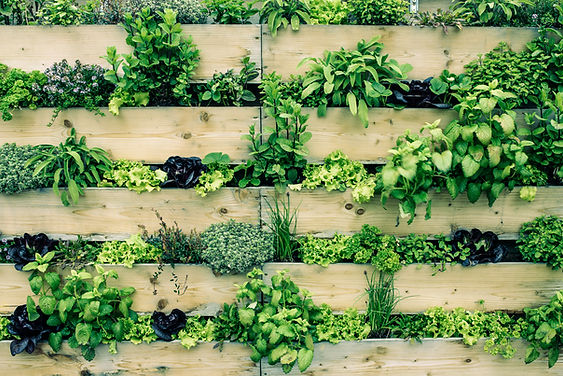 DIY, Palette, Vertical Garden