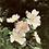 Thumbnail: Wild Rose | Lip & Skin Soothing Balm