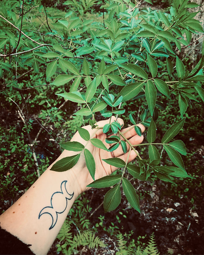 woman's hand holding an elder bush with triple moon tattoo on wrist
