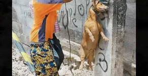 Maltrato animal y su relación con la conducta antisocial