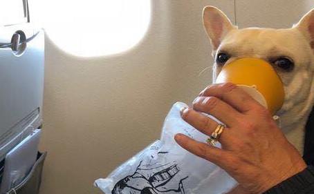 Экипаж самолета спас собаку, нарушив правила полета.