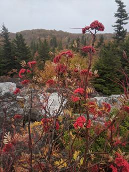 Dolly Sods Wilderness, West Virginia