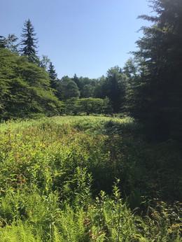 Laurel Fork South Wilderness, West Virginia