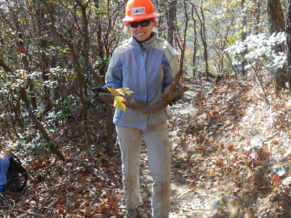 "Volunteers ""Touch Up"" the Hawksbill Trail"