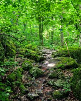 Lewis Fork Wilderness, Virginia