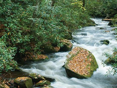 The Laurel of Asheville: Joyce Kilmer-Slickrock Wilderness