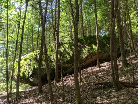 Beaver Creek Wilderness, Kentucky