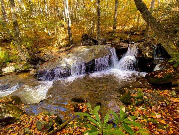 Little Wilson Creek Wilderness, Viginia