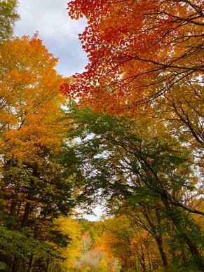 Little Wilson Creek Wilderness, Virginia