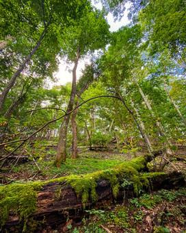 Racoon Branch Wildenress, Virginia