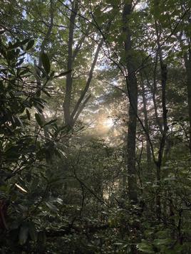 Racoon Branch Wilderness, Virginia