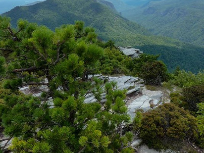 Asheville Citizen-Times: Celebrating 50 Years of Wilderness