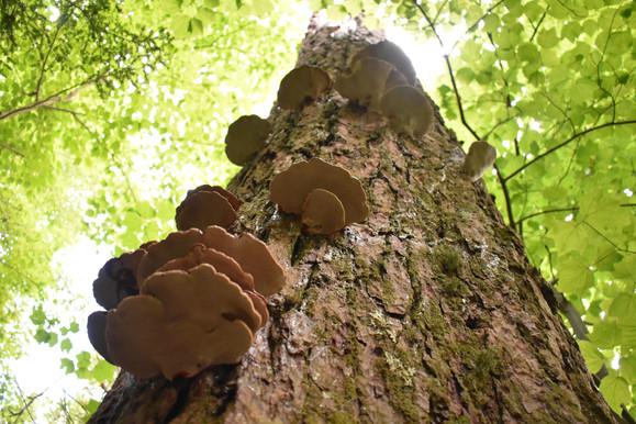 Joyce Kilmer-Slickrock Wilderness, North Carolina