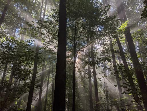 Stone Mountain Wilderness, Virginia