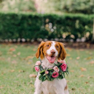 flowers for dog wedding .jpg