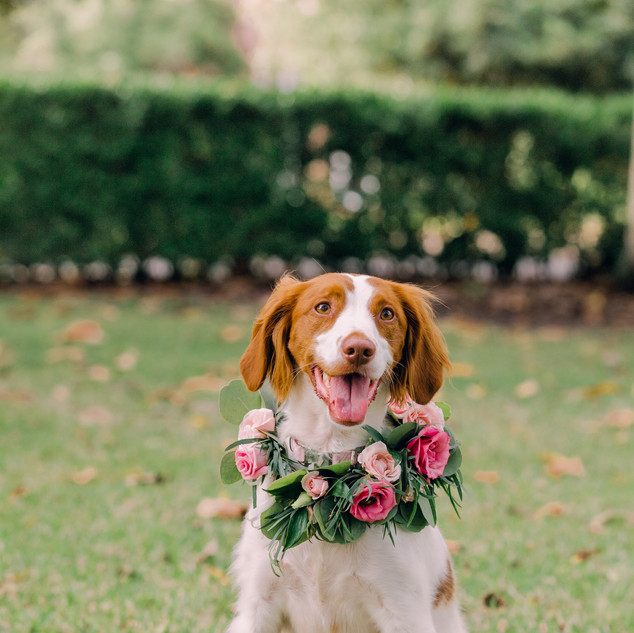 flowers for dog wedding .jpg